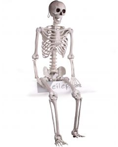 Forum Large Posable Skeleton Halloween Decoration 5ft Prop, White